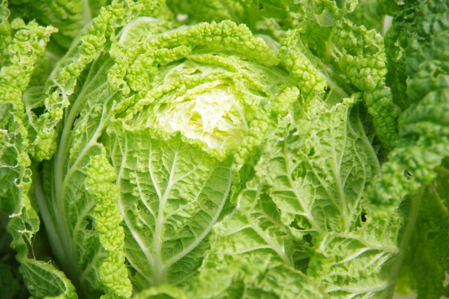 白菜の人気レシピ